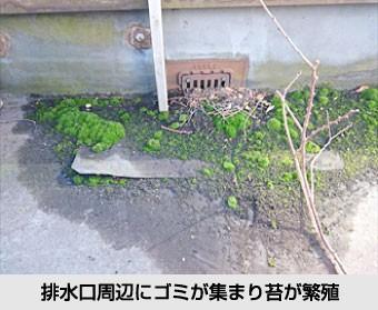 排水口周辺にゴミが集まり苔が繁殖