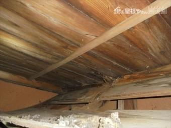 井原市 雨漏り修理 野地板腐っています。