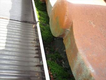 岡山市中区で軒樋の落ち葉が苔に