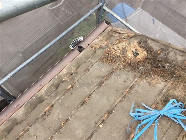 岡山市北区 屋根工事 雨漏り修理 防水紙の状態