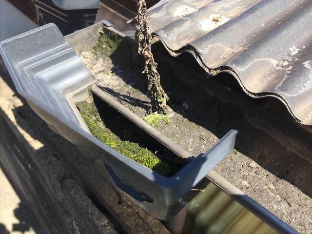 岡山市南区で隣の家の塀に苔が/雨漏りしていた壊れた雨樋を修理