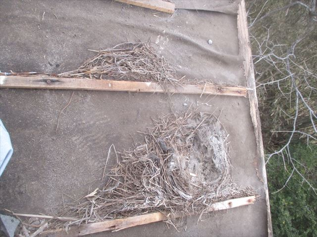 津山市で屋根修理 瓦撤去