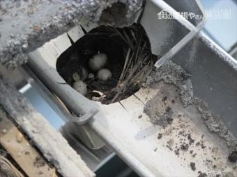 雨樋の上合の中に鳥の巣