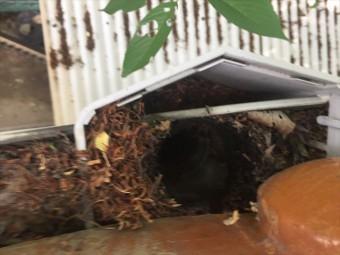 岡山市中区で集水器も落ち葉がびっしり