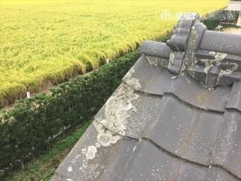 岡山市南区 雨漏り修理 瓦にコケ